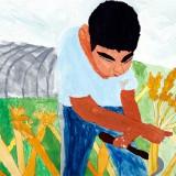 「小麦のしゅうかく」佳作 小竹 皇歌昭和小学校